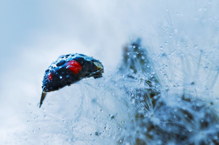 Bug drops by Bomm Park on 500px