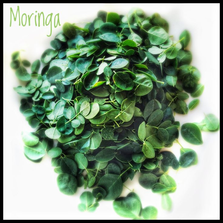How to Buy, Store and Use Drumsticks and Drumstick Leaves | Moringa