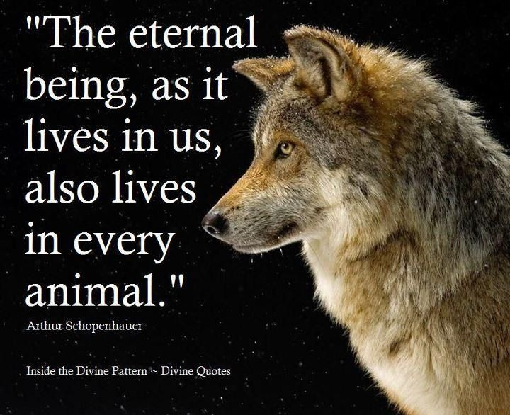 Animal Inspirational Quotes - Bing images