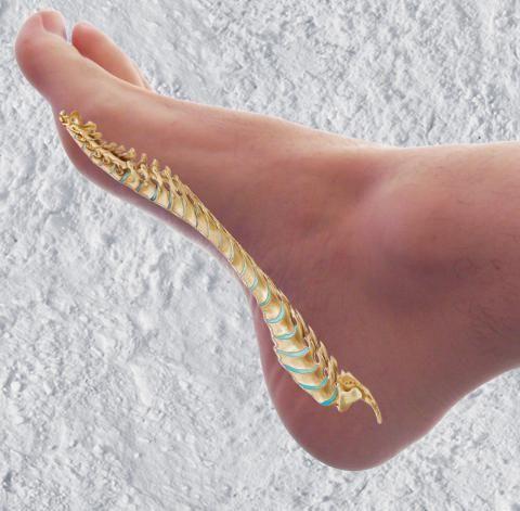 Na vnitřní staně chodidla je podle reflexologie páteř, pomocí jejího masírování si můžete ulevit od bolesti.