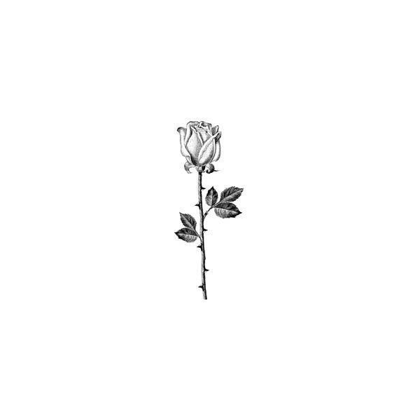 Inkadinkado - Products ❤ liked on Polyvore featuring backgrounds, flowers, drawings, black and plants