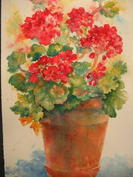 drawings of geraniums | View of studio (little house),from river in October.