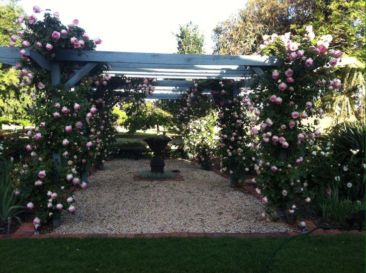 Pierre De Ronsard  rose arbour
