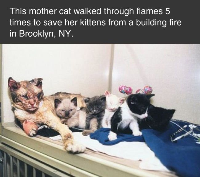 Mommy kitty saved all her babies!