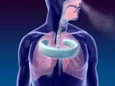 Awesome video to help understand your lungs. Respiratory System 3D