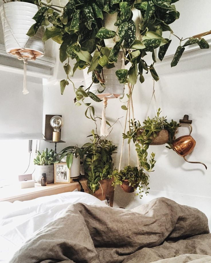17 Best Images About Urban Jungle Bloggers On Pinterest Jungle Animals Plant Pots And Plant