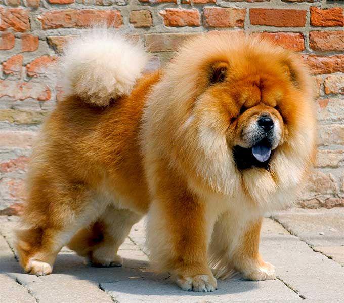 Distinctive Looking Dog