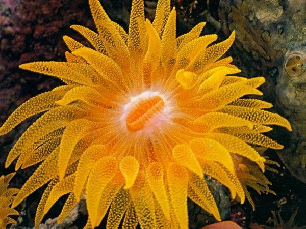 Photo anémone de mer