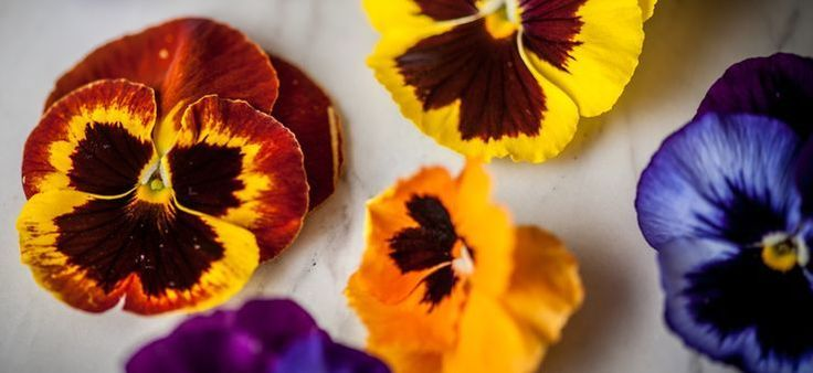 Floral Flavours in London's Restaurants! ->