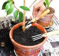Cómo hacer tierra para macetas | eHow en Español: