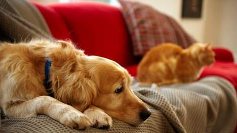 Huisdieren verlagen kans op hartklachten - Wetenschap & Gezondheid - VK