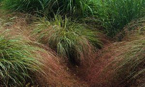 Best 25 stipa arundinacea ideas on pinterest stipa for Ornamental grasses for small spaces