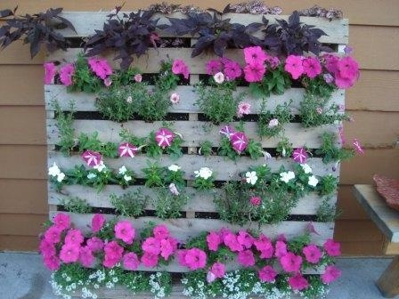 Love this hardwood pallet upcycled into a stunning vertical garden - perfect for a narrow balcony or limited space. There are 20 other creative ways to upcycle pallets with tutorials  DIY videos including potting benches, raised gardens and compost bays. | The Micro Gardener