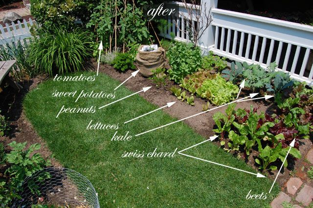 Front yard vegetable garden one month update gardens for Edible garden design ideas