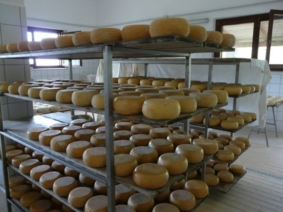 Cheese from the Sibillini Mountains in Le Marche