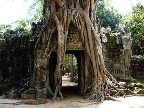 Temples of Angkor, Cambodia (www.intrepidtrave...)