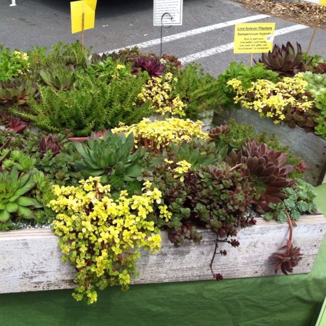 Unusual Planters For Sale Part - 31: Cool Succulent Planter For Sale At Local Farmers Market.