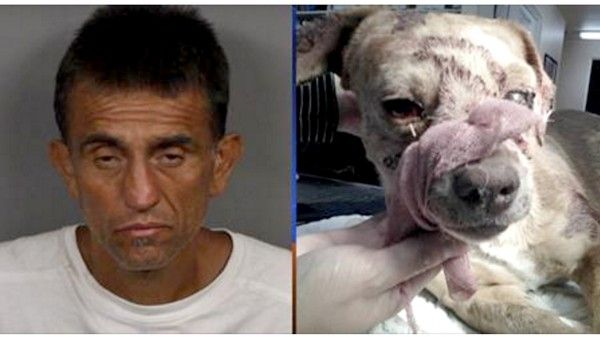 Demand jail time for owner that hit dog in the head with shovel until he passed away! RIP Rusty | YouSignAnimals.org