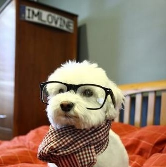aww! I want my dog to have swag! lol:)