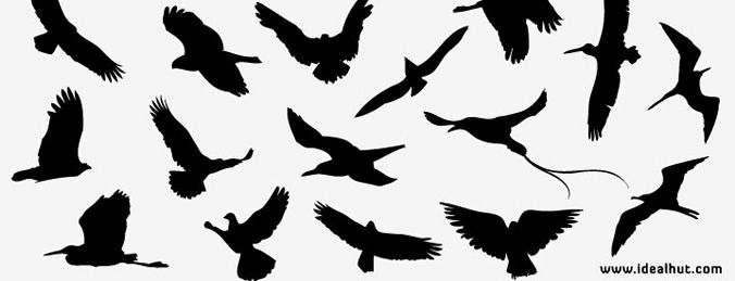 Free vector bird Silhouettes - Free Vector Download | Qvectors.net