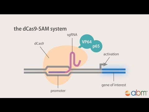 4) CRISPR Cas9 - Gene Regulation with dCas9 - YouTube