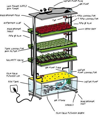 In-home aquaponics using an IKEA shelf, grow one meal a day, portion of fish with a side of salad