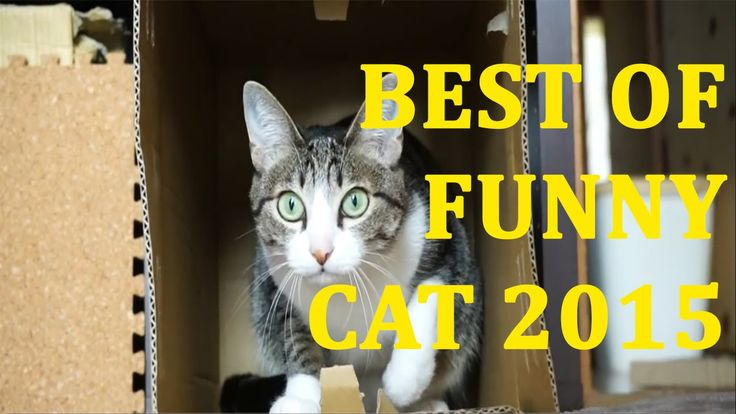 Best of Funny Cats 2015 | Love Cats | Smarts Cats | Cats Compilation 201...