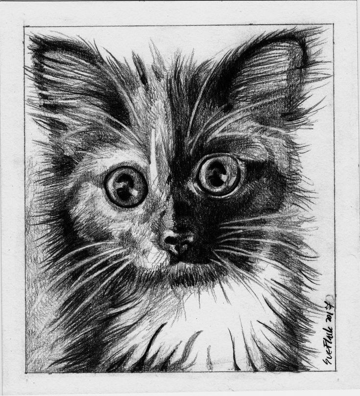 Big Eyed Cat - 2017 pencil paper 15 cm by 16.5 cm original #Miniature