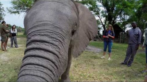 Elephant encounter with Naledi at Abu Camp #bucketlist