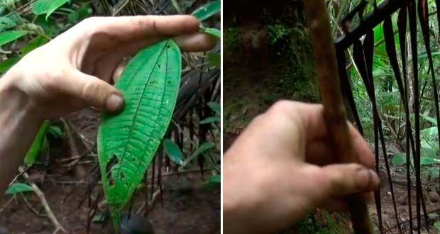 Tres técnicas de supervivencia con plantas medicinales