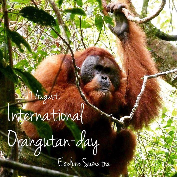 International orangutan-day 2015