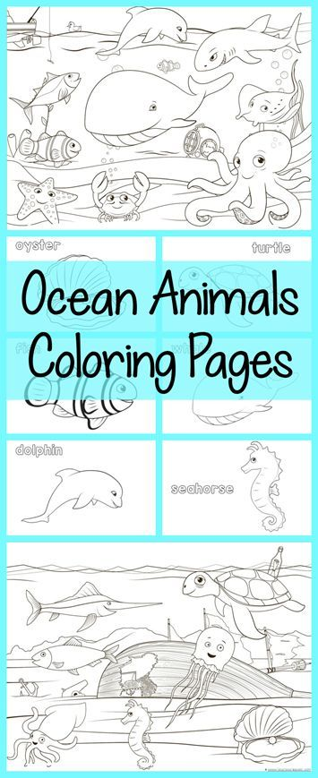 Ocean Animals Coloring Pages ~ all free! Color a dolphin, whale, octopus, jellyfish, squid, seahorse and more!