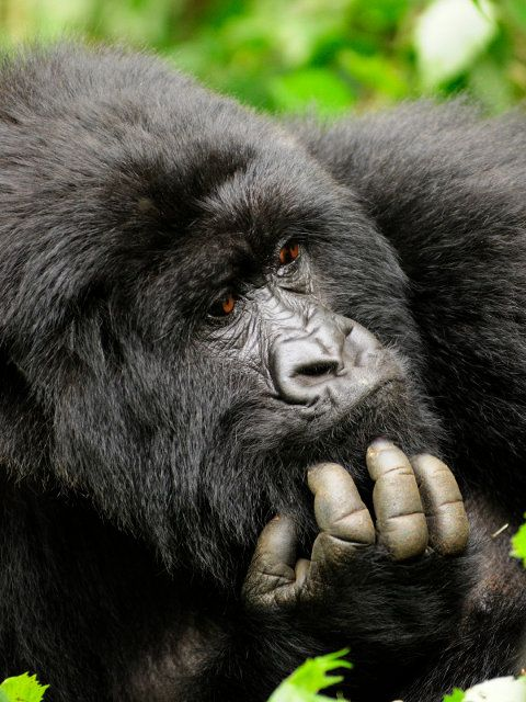 Review a list of the top 10 most endangered species in Africa and see what you can do to help!