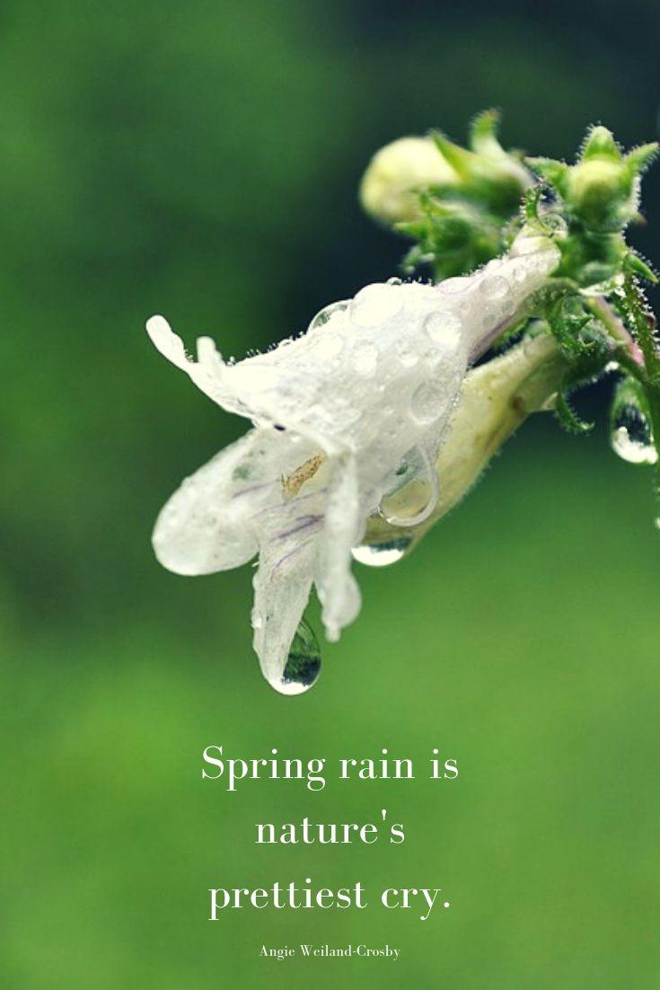 Rain Is Magic For The Soul Nature Quotes Rain Quotes Rain