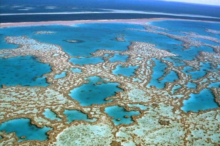 bucket list: great barrier reef