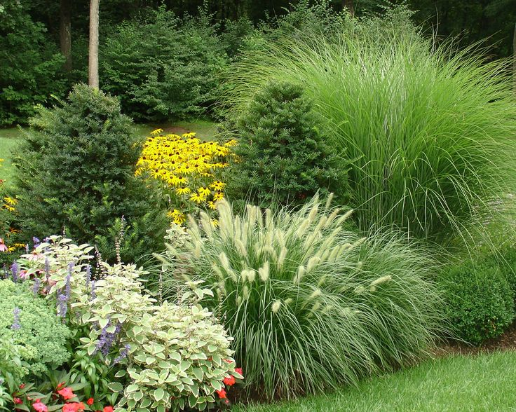 Mixing ornamental grasses with evergreens works well in an for Ornamental grass bed design