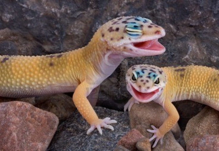 Best Food For Baby Leopard Geckos