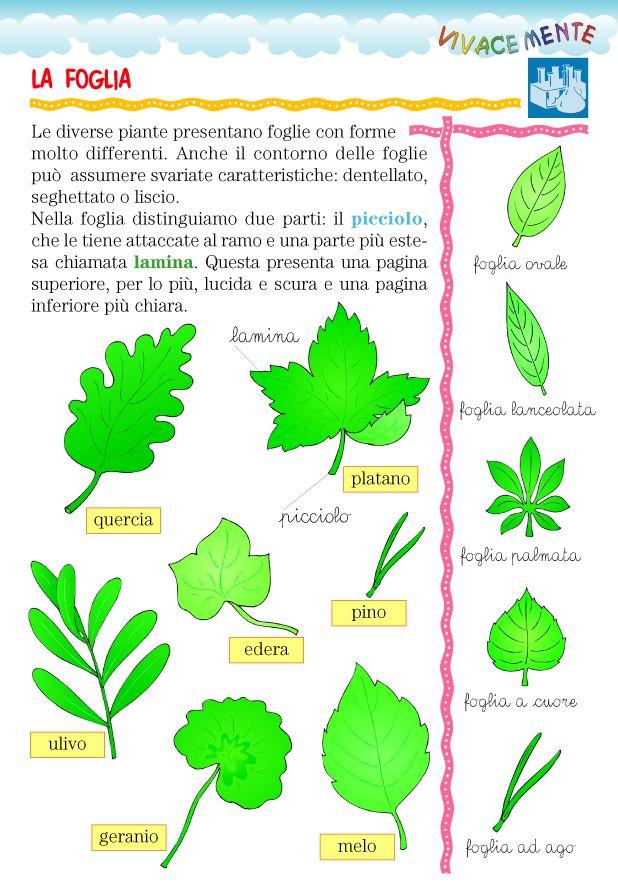 La morfologia è una branca della biologia che studia l'aspetto esteriore di un essere animale, vegetale o minerale.   In questa scheda trov...