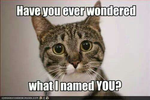 I have heard my cats name the other cats.                                                                                                                                                                                 More
