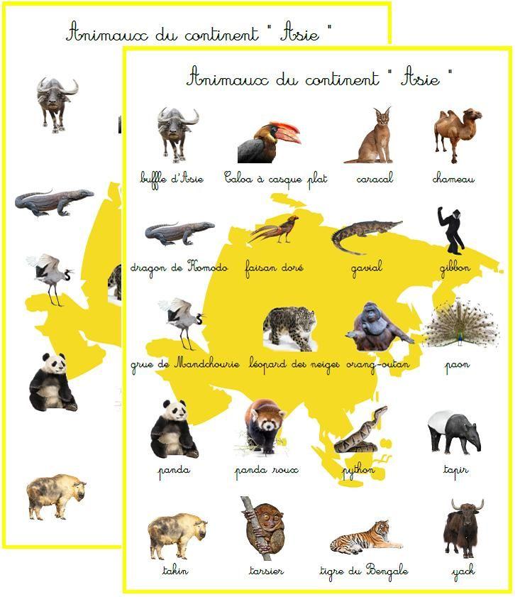Résultats de recherche d'images pour « animaux par continent »