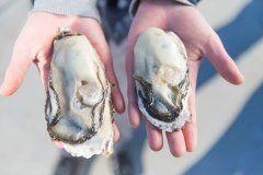 宮城県石巻市の漁師直送牡蠣メンバーシップカキの環クラウドファンディングにてメンバーを募集中  一般社団法人ピースボートセンターいしのまき代表理事山元崇央は専任漁師を選べる牡蠣メンバーシップ制度カキの環わにおいて2017年6月8日から7月28日の期間クラウドファンディングMakuakeにてメンバーの募集しておりますむき牡蠣1キロを漁師を選んで購入いただけます  牡蠣メンバーシップ制度の背景  2011年3月の東日本大震災から6年が経過し魚介類の水揚げ量は震災前の8割以上回復していると言われていますしかし漁業者たちは産業の衰退人口減少それに伴う担い手不足など震災以降さらに深刻化している地域課題を抱えたまま復興の道を進んでいますこの度募集する牡蠣のメンバーシップ制度カキの環では生産者と消費者をつなぎ合わせることで交流人口を増やし一次産業の活性化にも寄与します  カキの環の概要…