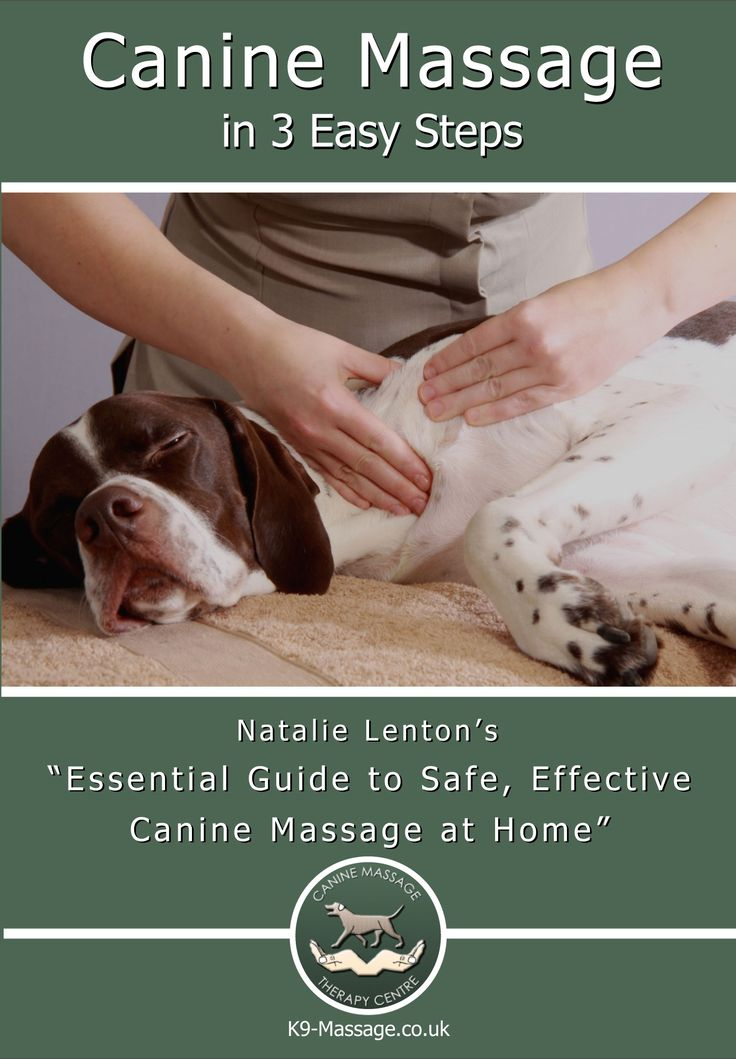 Wow! this DVD teaches you a full routine for your dog using professional canine massage techniques. Step 1 - Fun Canine Anatomy Dot to Dot, Step 2- Practice & Perfect your Canine Massage Techniques, Step 3 - Put everything together and follow Natalie Lenton onscreen with this professionally choreographed routine. Bonus Section - Harmful Habits; what is your dog doing every day that may be causing or worsening a mobility issue? Buy your copy today at www.K9-Massage.co.uk