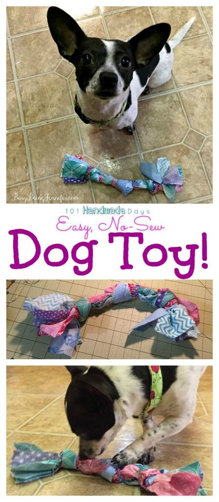 101 Handmade Days: Scrap Fabric Dog Toy & Canine DNA Testing - Busy Being Jennifer #ad
