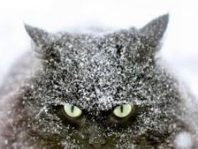 I hate snow photo: I hate snow Snow_Cat946.jpgFunny Kitty, The Doors, Black Kitty, Funny Humor, Funny Stuff, Happy Campers, Black Cat, Cat Lady, Baby Cat