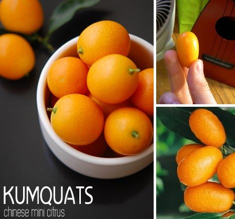 """This tiny, cute fruit with the somewhat amusing name originated in China as did its name: an anglicization of the Cantonese term for """"golden orange"""". Kumquats are hardier than most citrus plants and have been successfully cultivated in Florida, Louisiana and California. Unlike most citrus fruits, Kumquats can be eaten whole, without peeling – the rind is sweet compared to the more sour and slightly salty pulp, a fact that according to Kumquat aficionados creates an enjoyable contrast in…"""