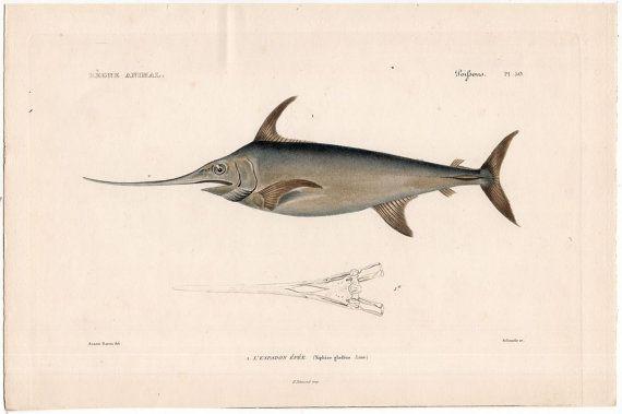 1836 swordfish print original antique rare sea life ocean marine animal print - l'espadon épée