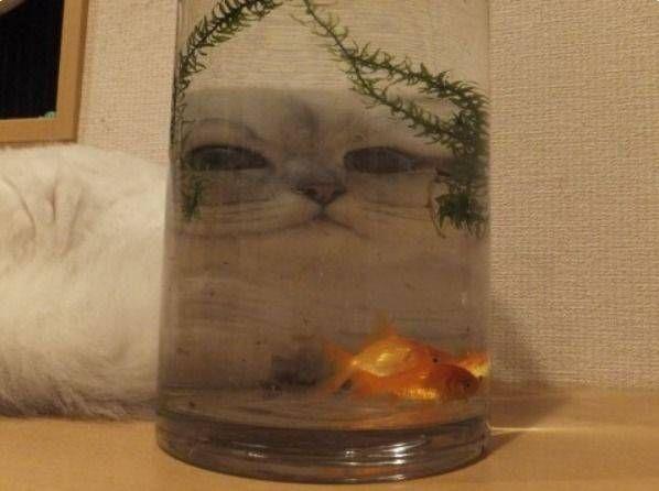 ジャバ・ザ・ハットみたいなネコに狙われる金魚の気持ちェ。。。 : ぁゃιぃ(*゚ー゚)NEWS 2nd
