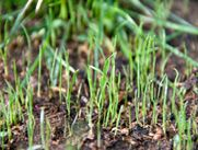 Learn what to do and what NOT to do when it comes to seeding your lawn.