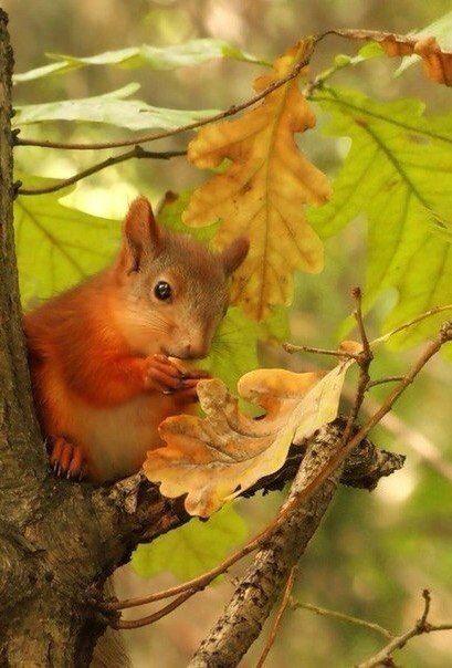 ❧ Autumn - L'automne ❦ 2