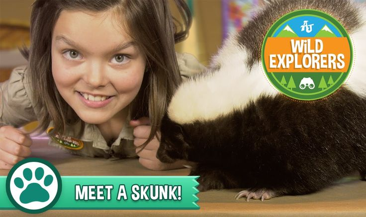 What's black and white and awesome all over? This new episode of Wild Explorers, where Cami meets a skunk! Learn some cool skunk facts and hilarious jokes - and don't forget to #playwild!